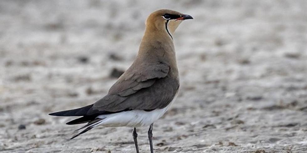 Степи Калмыкии и солёное озеро Маныч: наблюдение за птицами
