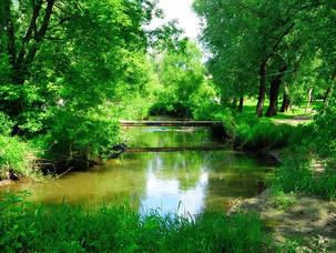 """12 июля: птицы заказника """"Долина реки Сетунь"""""""