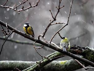 Отношения в птичьих парах и птицы Главного ботанического сада