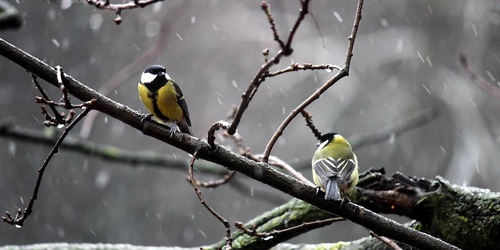 Птицы Главного ботанического сада