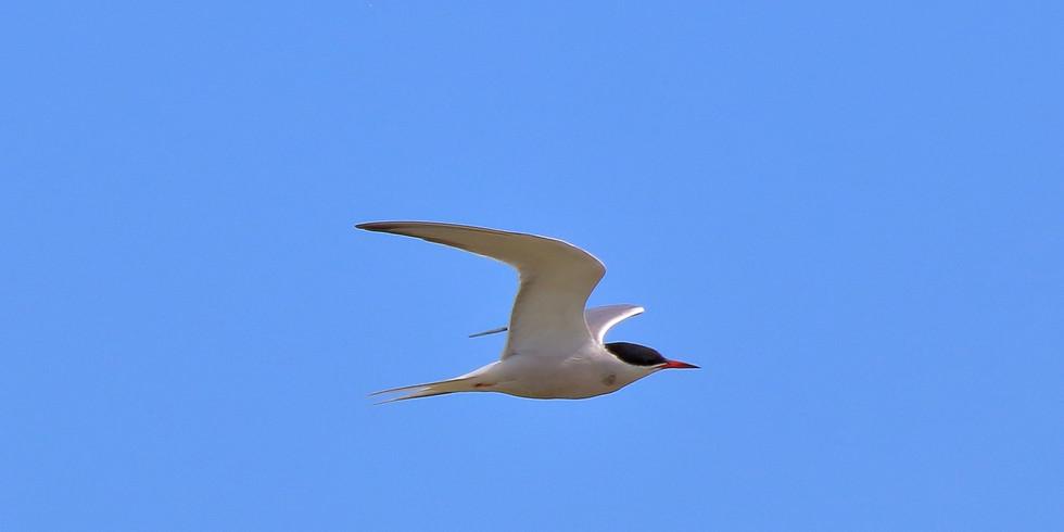 Околоводные птицы летнего Царицыно