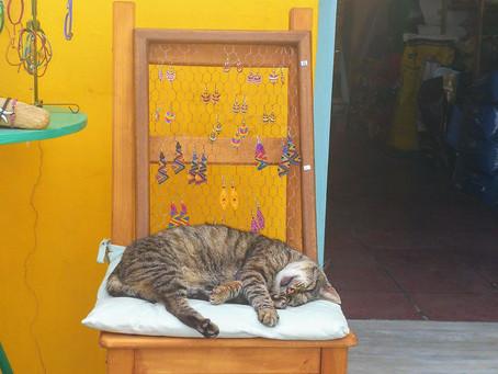 kitty goals in Crete