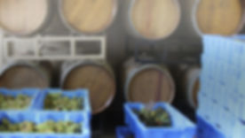 wyncroft-grapes-cover-light copy.jpg