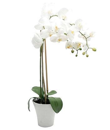 Phalaenopsis Orchid In Ceramic Pot - White
