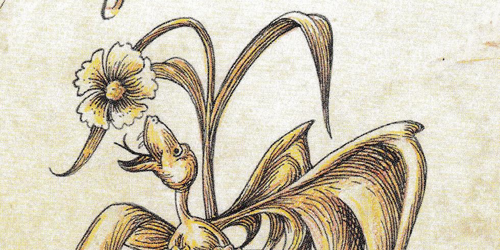 Drachenkräuter