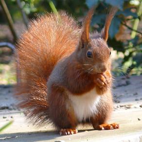 Eichhörnchenspiel (ab 6 Pers.)