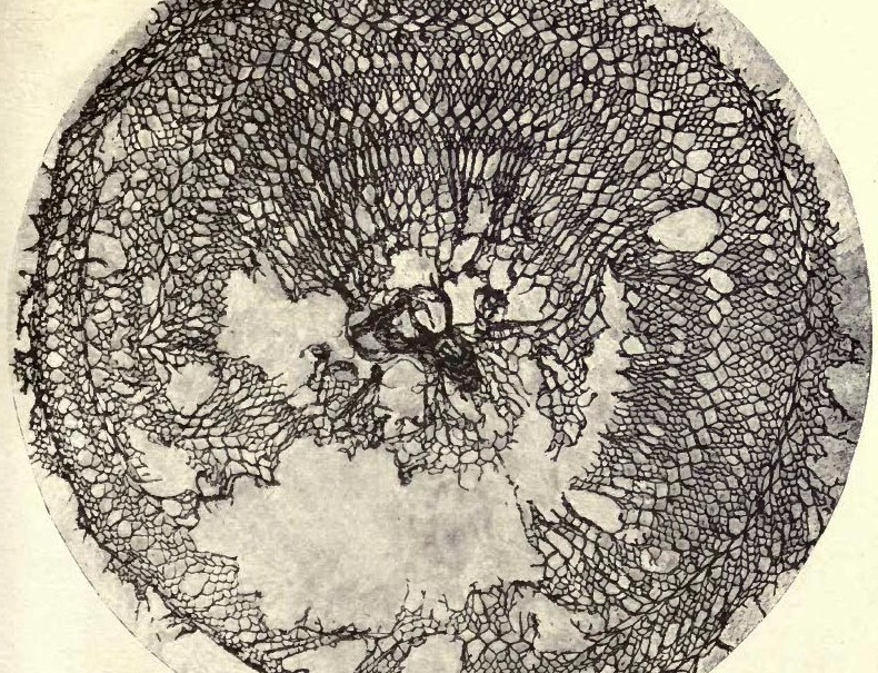 Ancient Egyptian lace