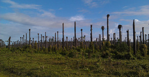 Vom Palmöl und dem grössten Artensterben der Geschichte