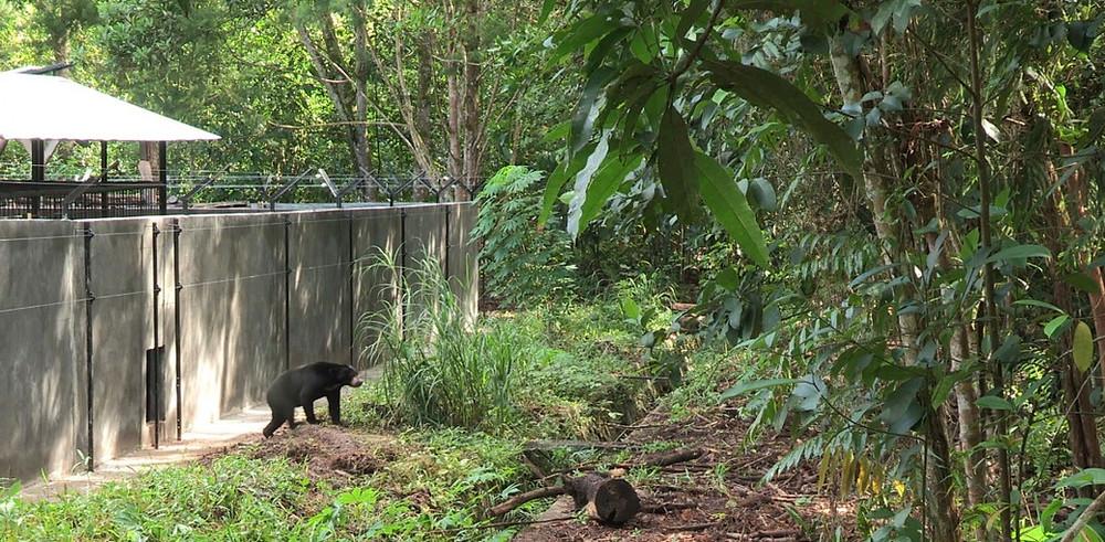 Malaienbären leben in der neuen BOS-Rettungsstation Samboja Lestari (Borneo) mit sehr viel Auslauf und in bärengerechter Haltung