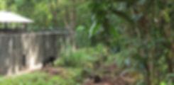 Bärenparadies: In der neuen BOS-Rettungsstation Samboja Lestari (Borneo)