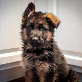 Cute Puppy Coda.jpg
