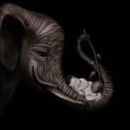 BW Elephant.jpg