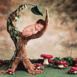 Ortiz Tree.jpg