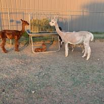 Cletus, Baby Coletta, Fiona