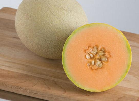 Cantaloupe, Sahrah's Choice