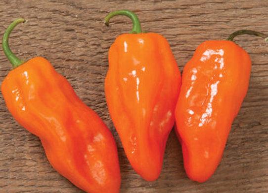 Pepper, Helios (Hot)