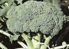 Broccoli, Packman 4 pack