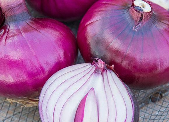 "Onion, Red Zepplin - 4"" pot with 15-20 Plants"