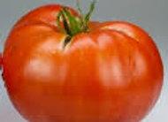 Tomato, Super Fantastic
