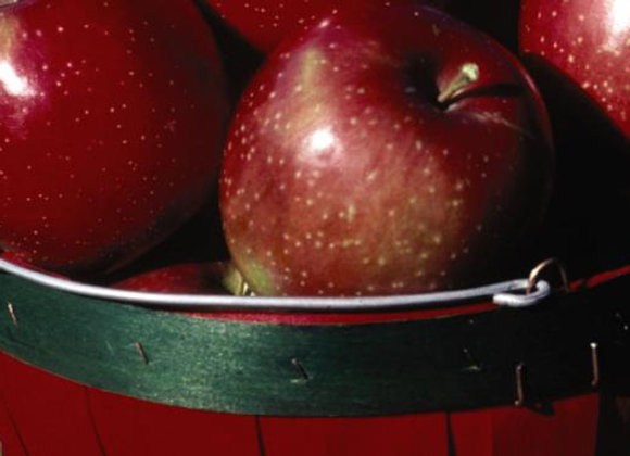 Apple Haralred Malus 'Haralred'