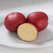 potato norland red.jpg