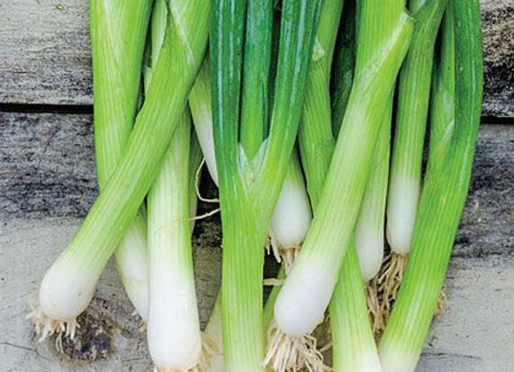 "Onion, Parade Bunching - 4"" pot with 10-15 Plants"