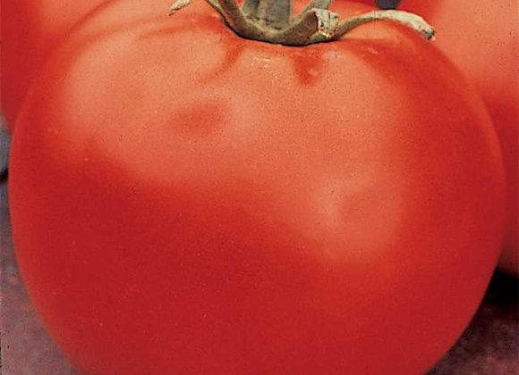 Tomato, Celebrity