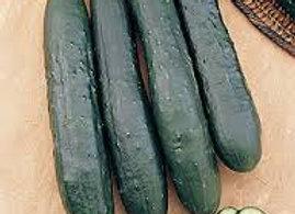 Cucumber, Burpless Supreme