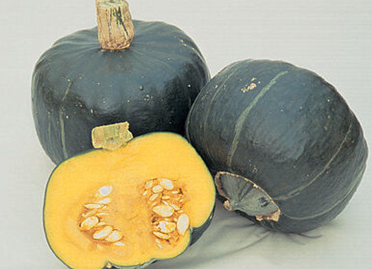 Squash, Winter Butternut Early