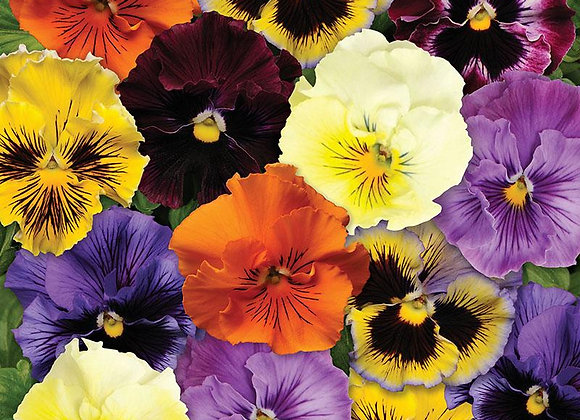Pansy, Frizzle Sizzle Mix