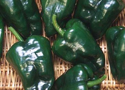 Pepper, Ancho (Pablano when fresh)