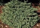 Spruce Mesa Verde