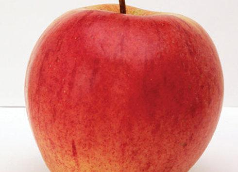 Apple, Norland (Sem-Dwarf Mid)