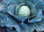 Cabbage, Stonehead
