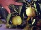 Pear Tawara Asian