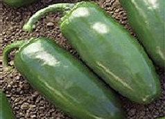 Pepper, Chichimecca (Hot)