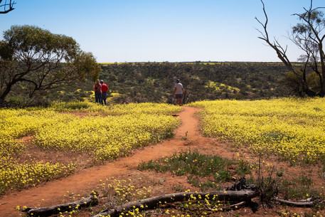Love blossoms - The Weekend Australian
