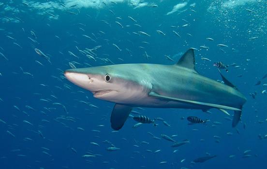 Shark Fin Soup: Why Singapore Has Taken It Off The Menu