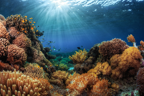 Saving the Maldives' Coral Reefs: How Tourists Can Promote Conservation