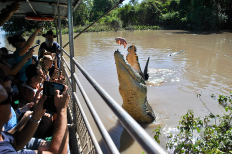 Wild weekend in Darwin - Straits Times