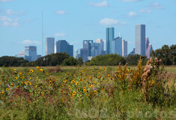 Downtown-with-sunflowers-FB