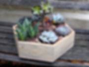 single planter copy.JPG