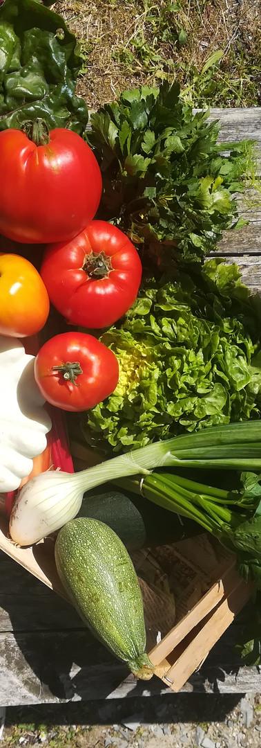 Patisson tomate céléri fenouil courgette