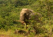 Nam Gaew, Tree Tops Elephant Reserve