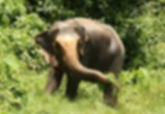 Lam Poon, Tree Tops Elephant Reserve