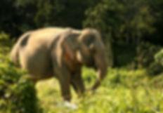 Nam Phet, Tree Tops Elephant Reserve