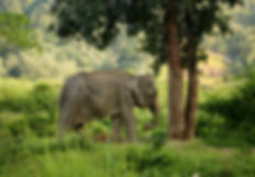 Nam Sook, Tree Tops Elephant Reserve