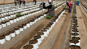 Vegetables Cultivation with Cocopeat under Shade Net House
