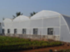 fan-and-pad-greenhouse-500x500.jpg