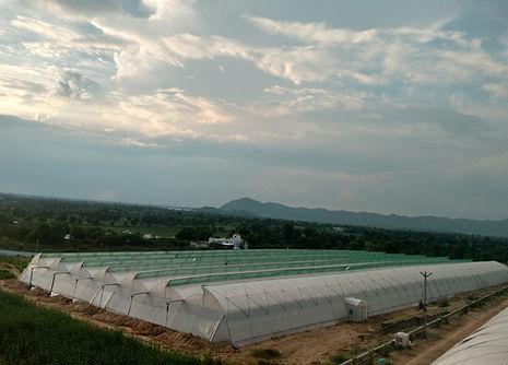 Greenhouse_Manufacturer_AAOPl.jpg